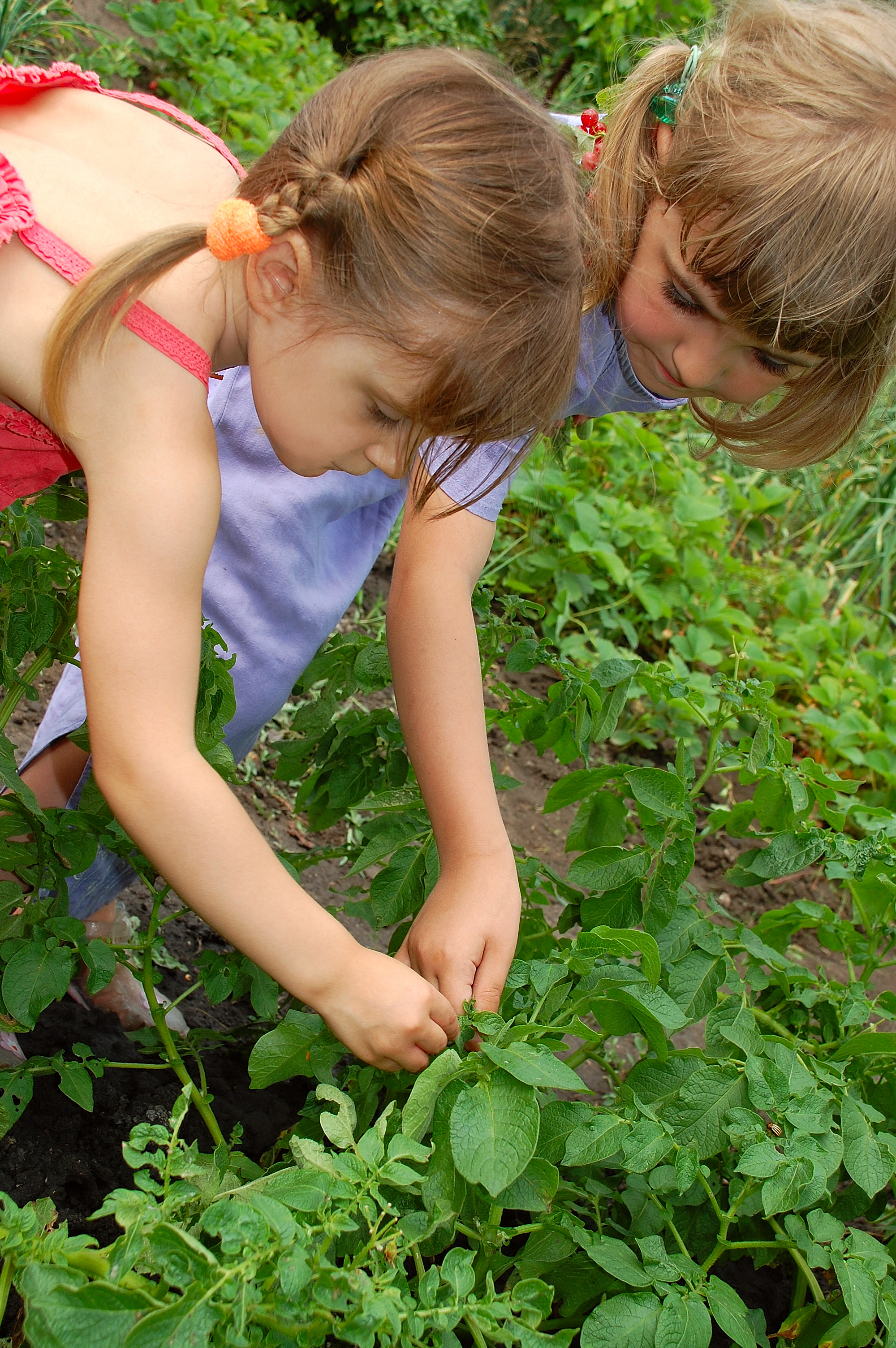 two-girls-gardening-5482068.jpg