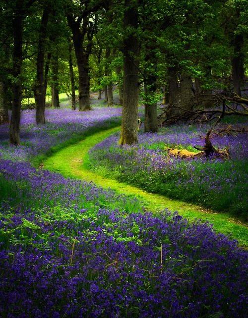 bluebell wood 3.jpg