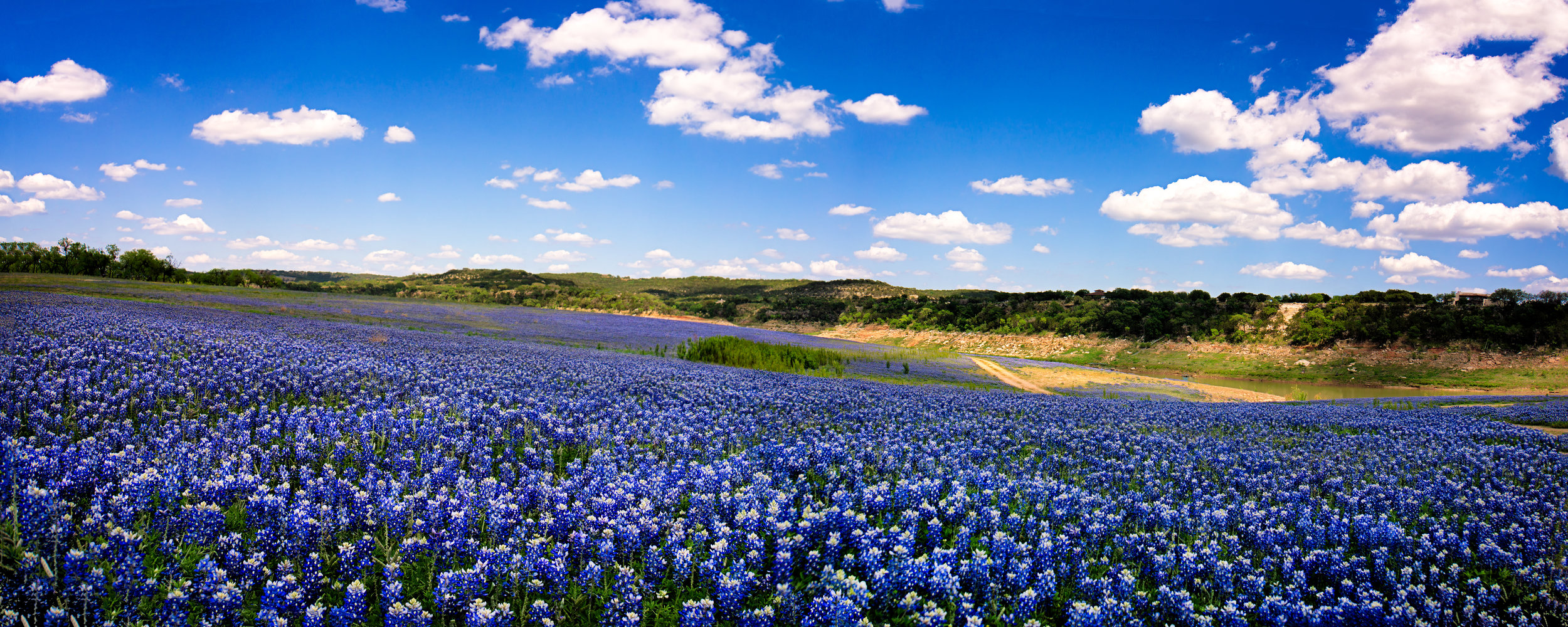 bluebonnets 2.jpeg