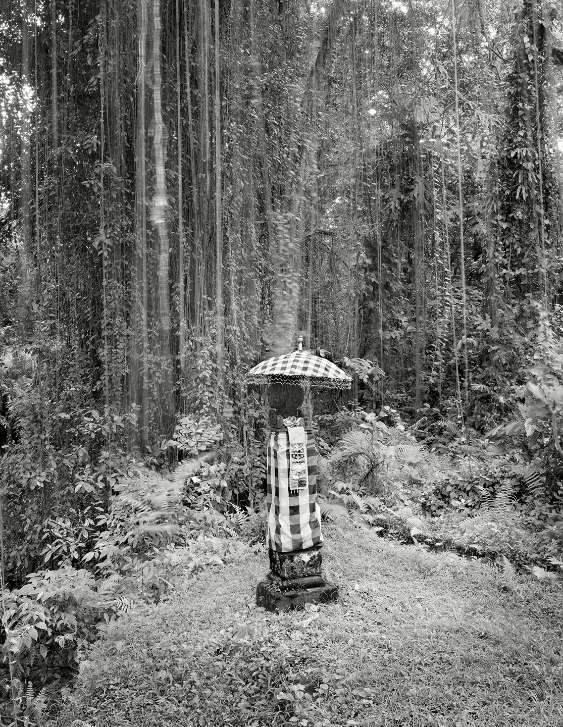 Offerings to the Trees, Bali, Indonesia - 2008 copy.jpg