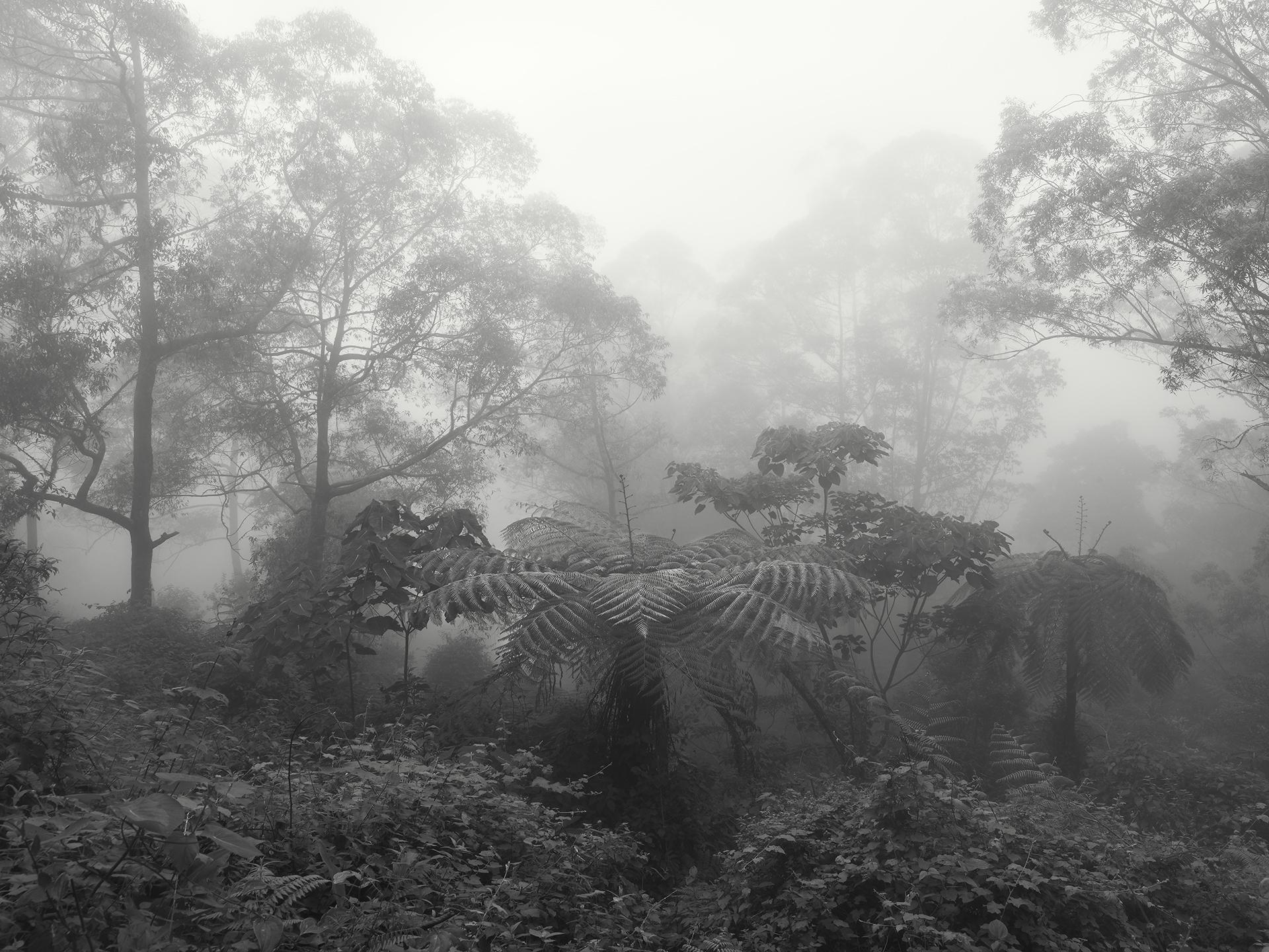 Large Fern, Bali - 2010 copy.jpg