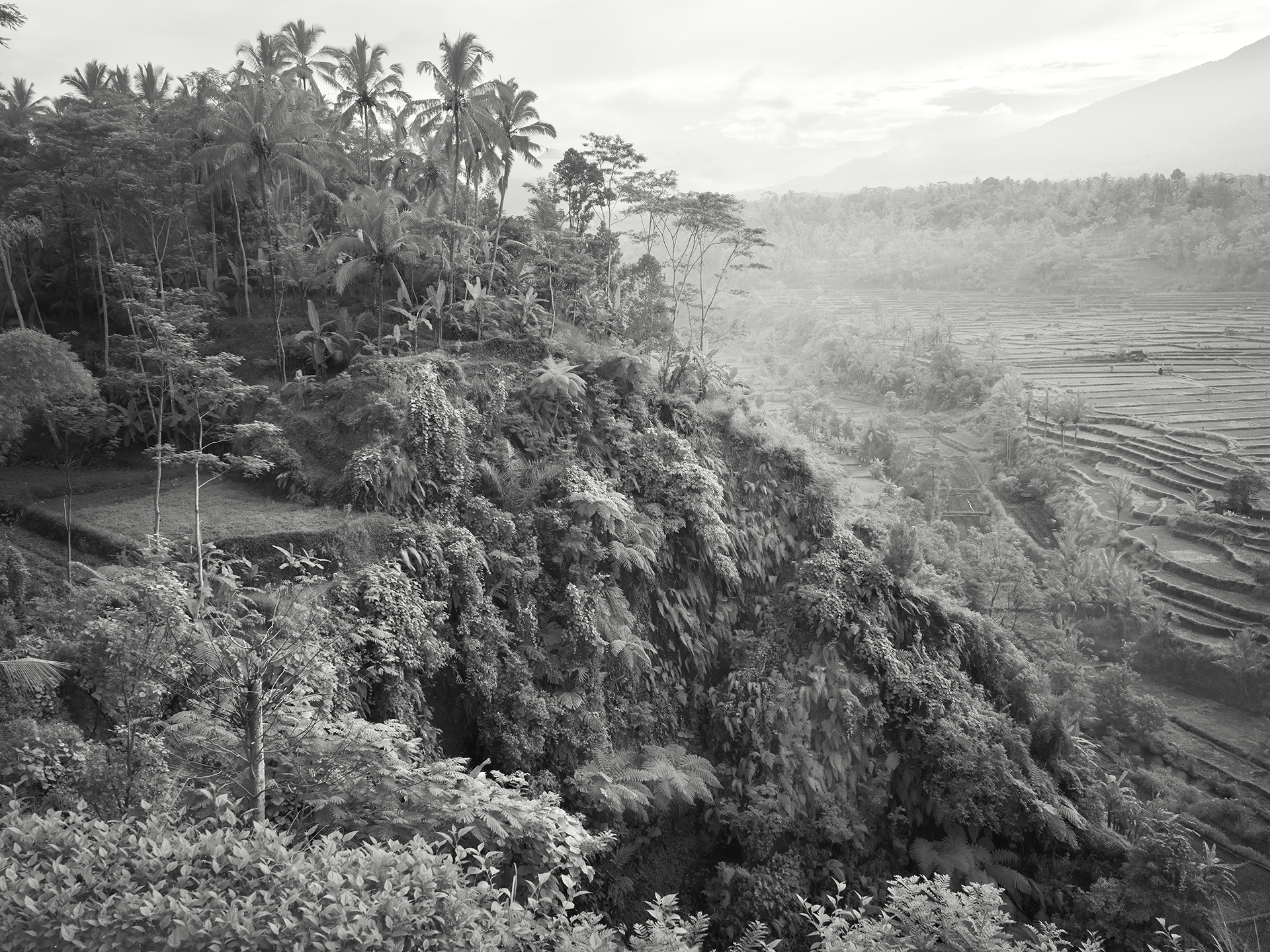Ferns and fields, Bali, - 2010 copy.jpg