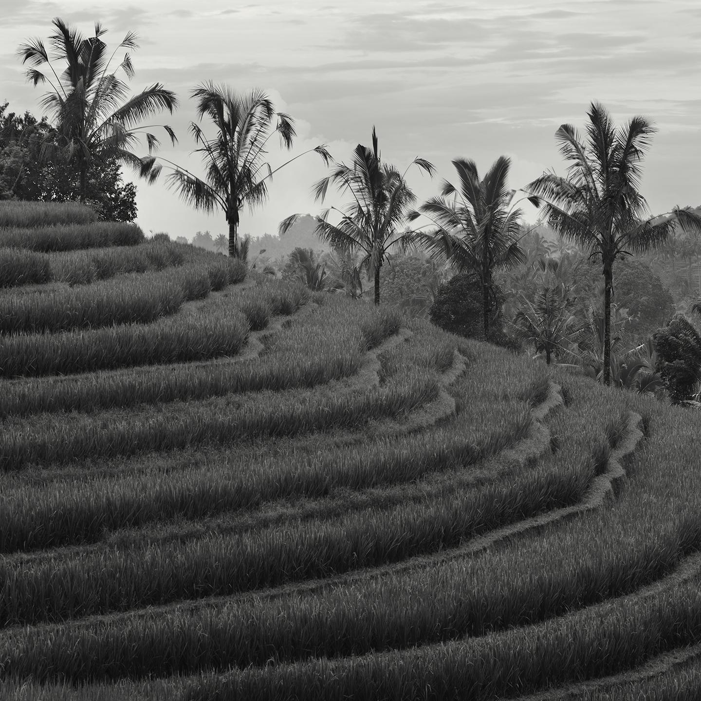 Antapan Terraces, Bali - 2010 copy.jpg