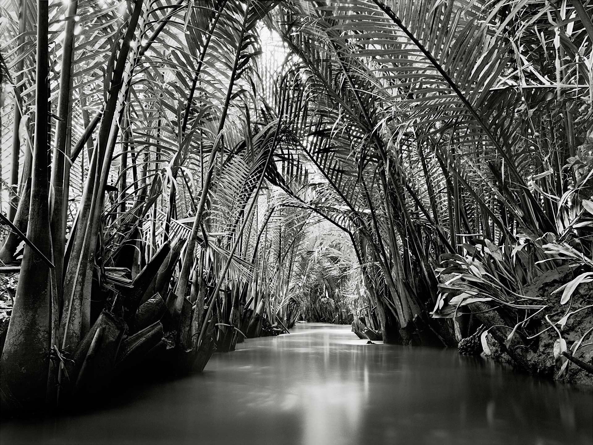 Ben-Tre-Mangroves-2003.jpg