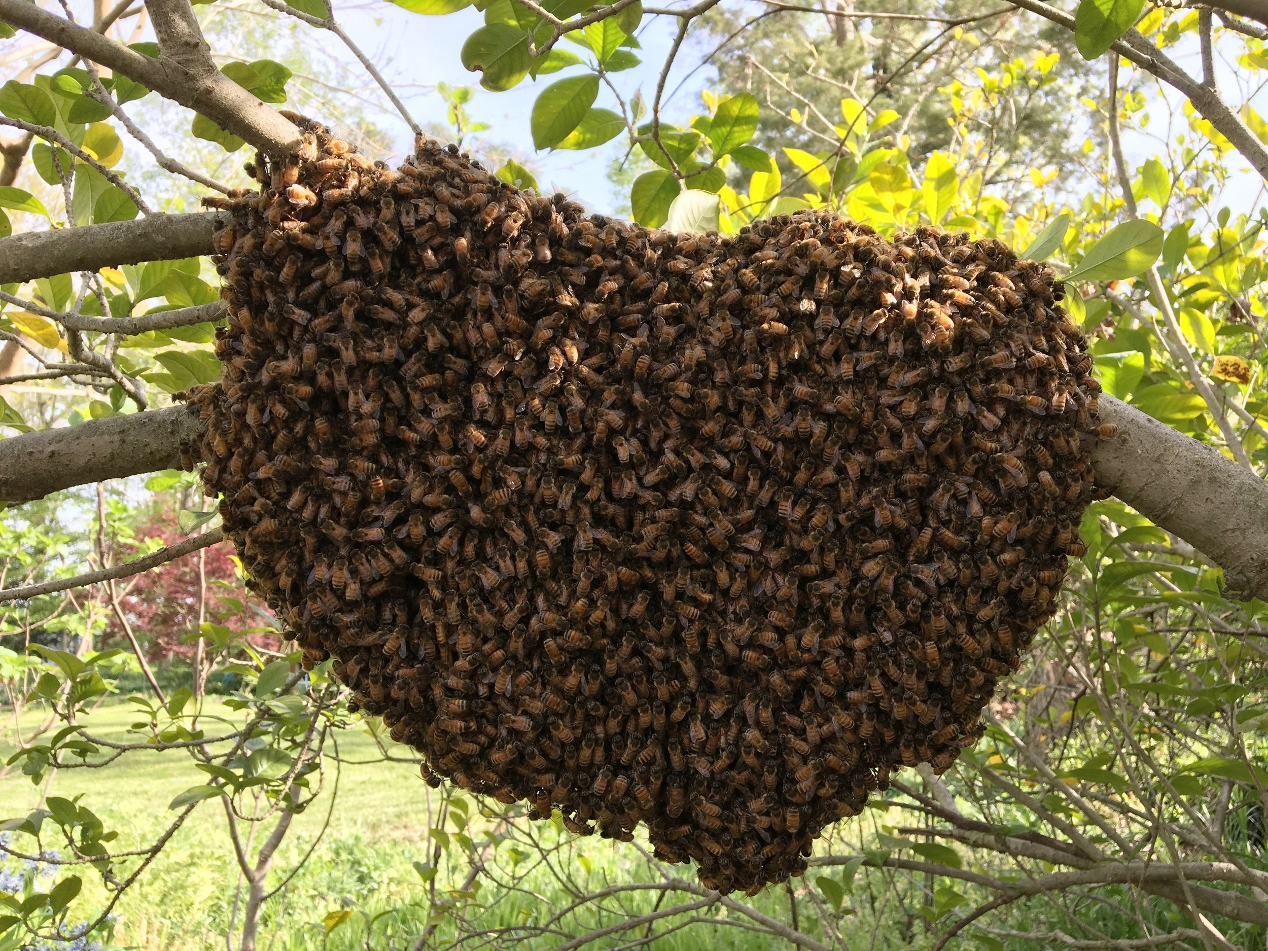 swarm3.jpg