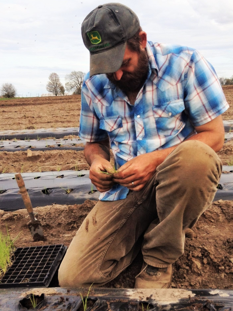 John transplanting a 200-count tray of onions.