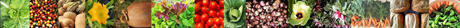 VegetableBanner.png