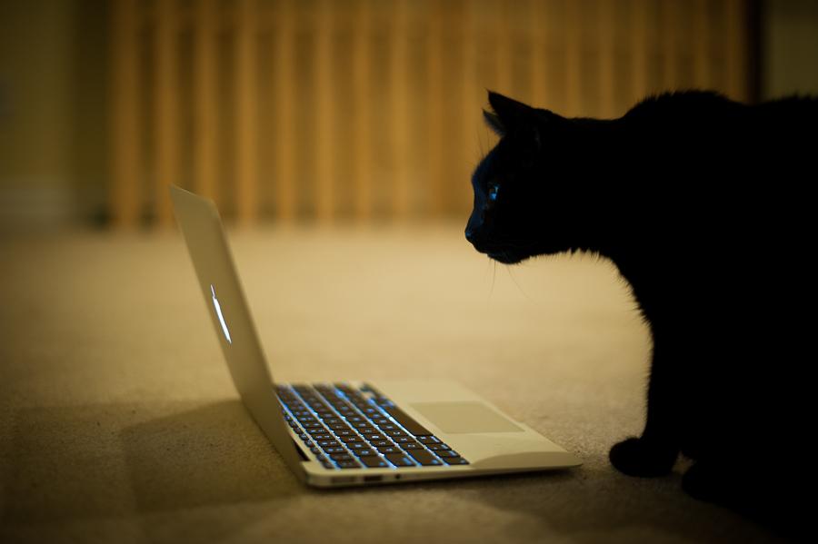 20131228123047-Cat.jpg