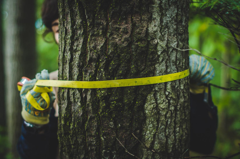 tree-dbh-scientist-measuring-field-work-photos