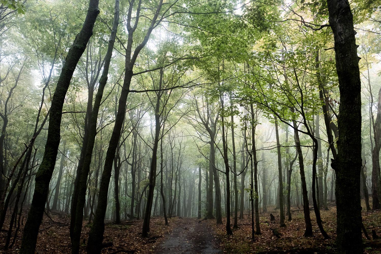 mont-st-hilaire-forest