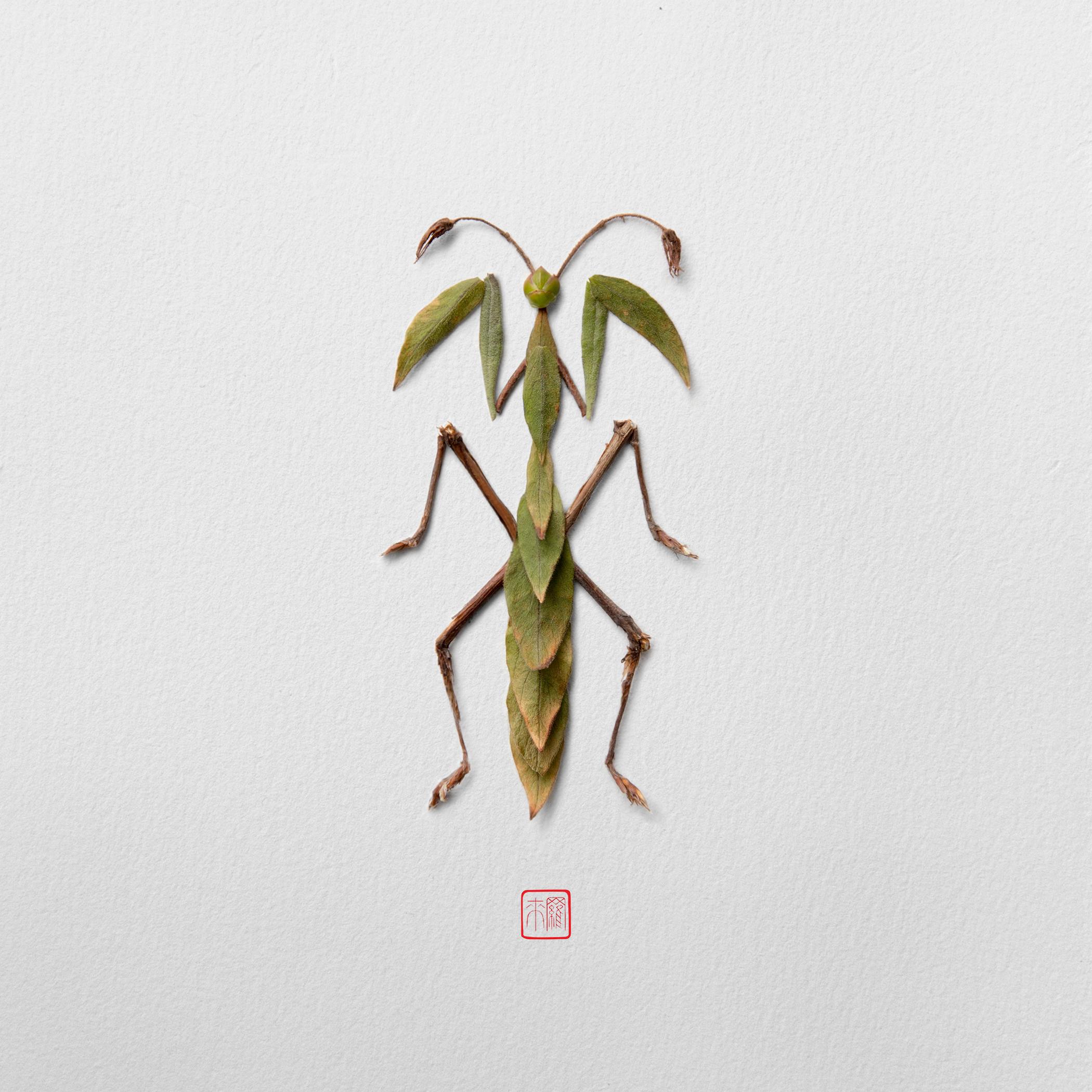 mantis-raku-inoue-natura-insects