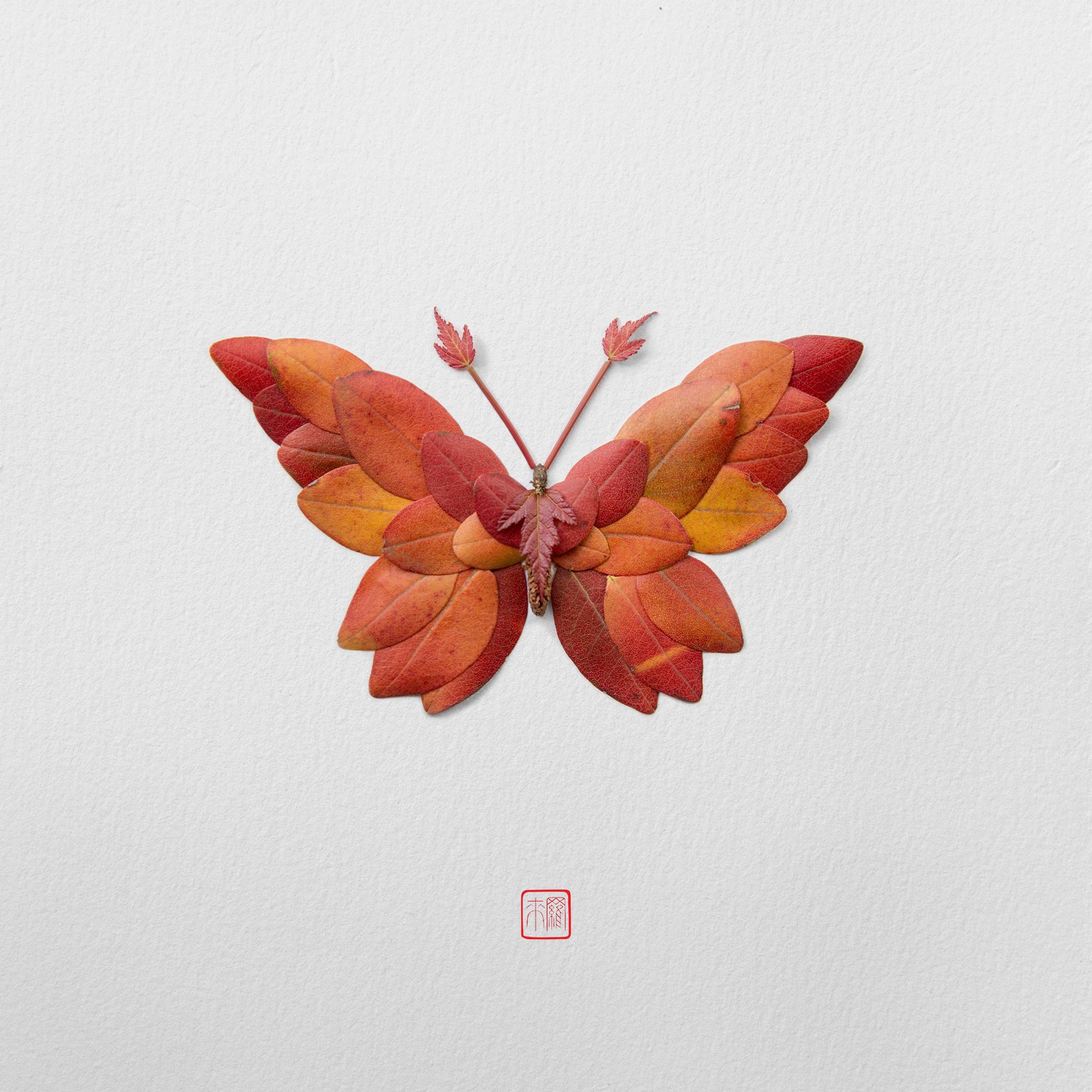 autumn-butterfly-by-raku-inoue