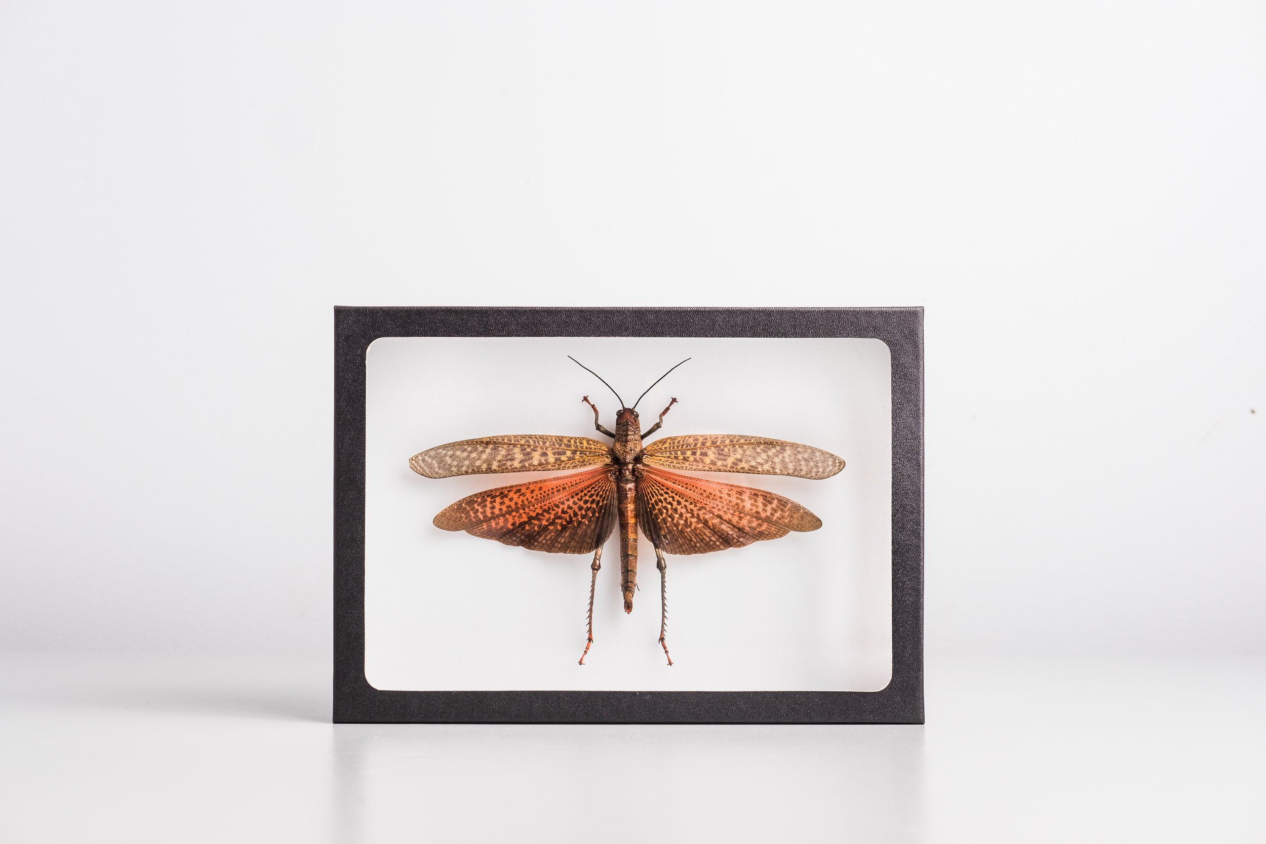 insect-art-insectarium-collaboration-avec-artists
