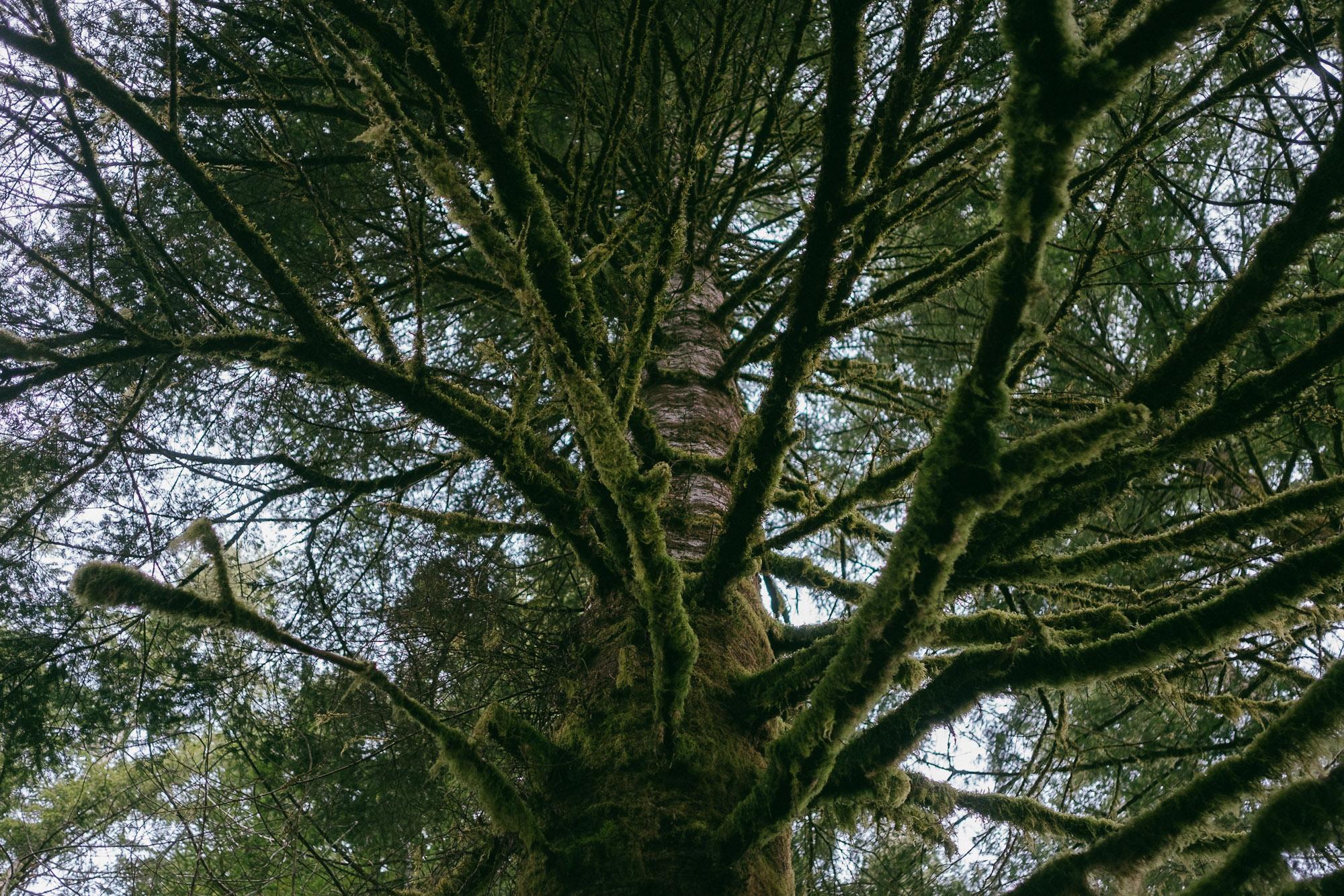 photo-of-mossy-tree-in-portland-oregon