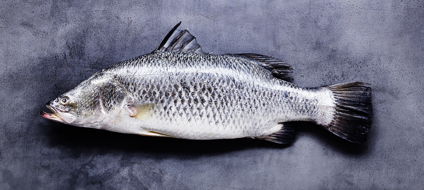Barramundi Australian native fish.jpg