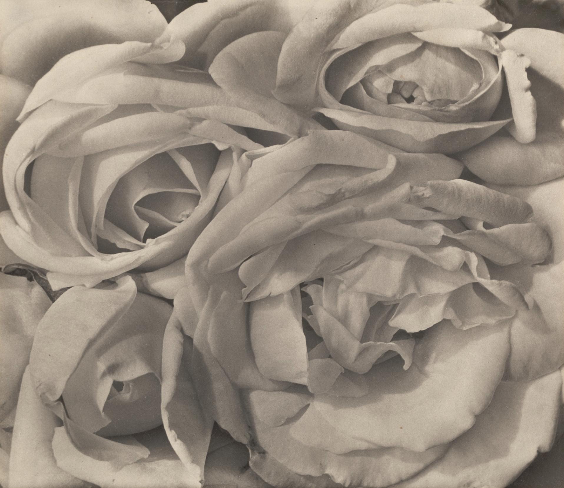 Roses, 1924;  platinum print