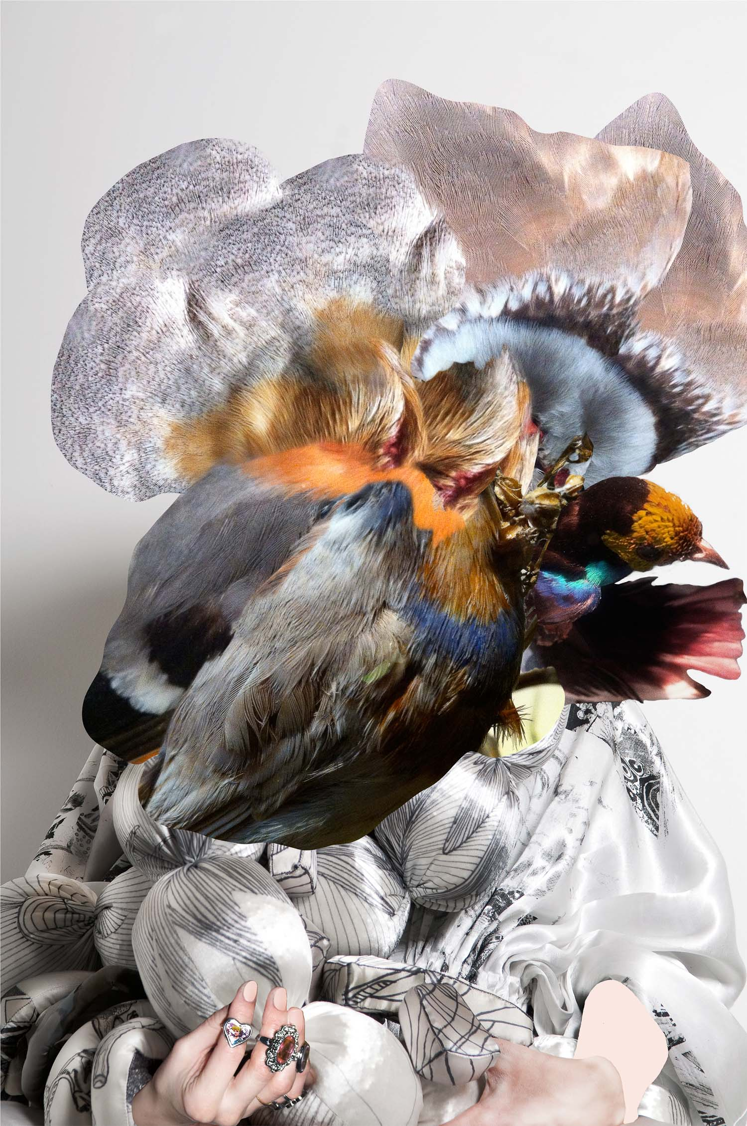 Feather Head, 2012