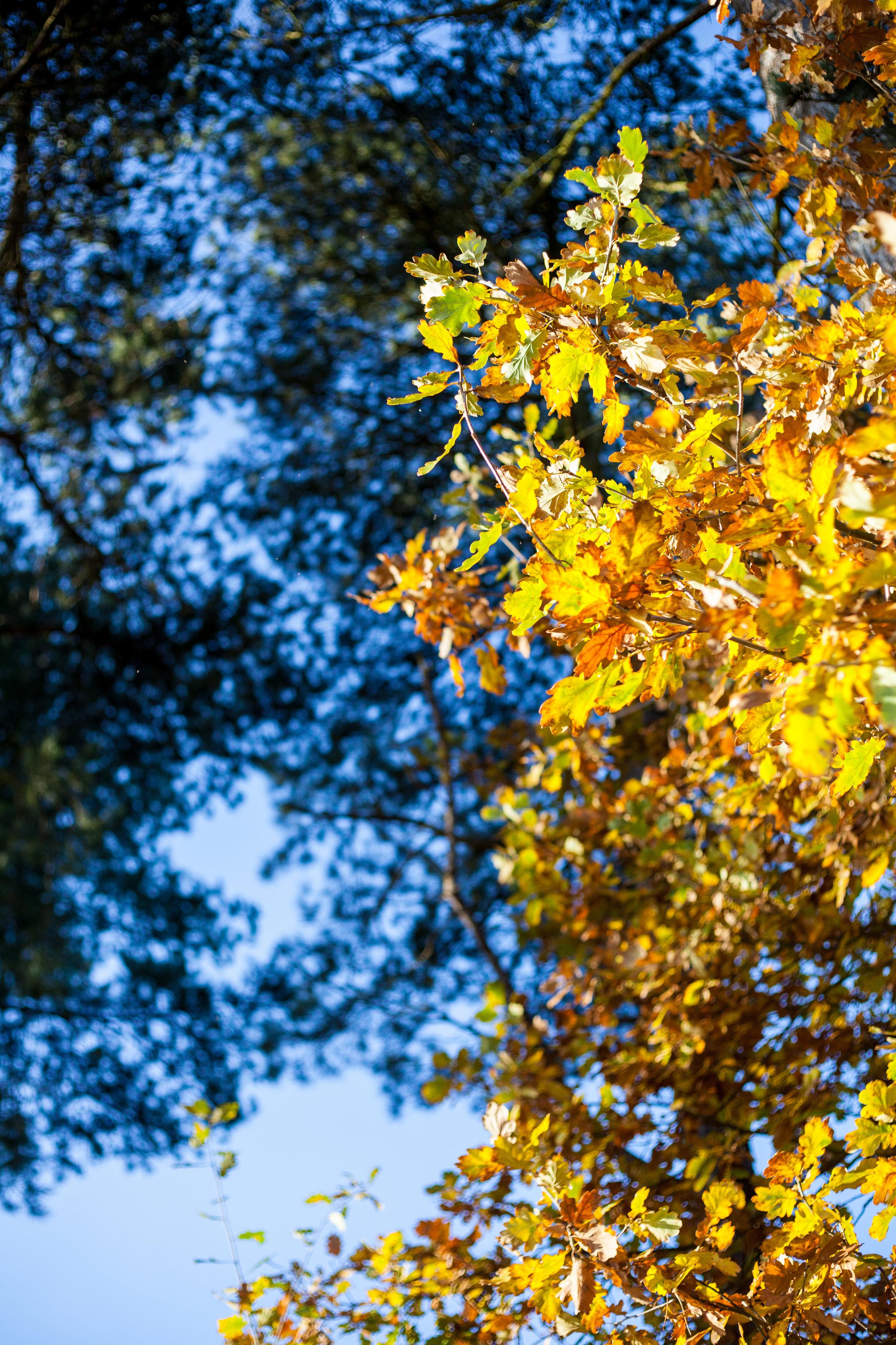foresttrees-1IMG_4990.jpg