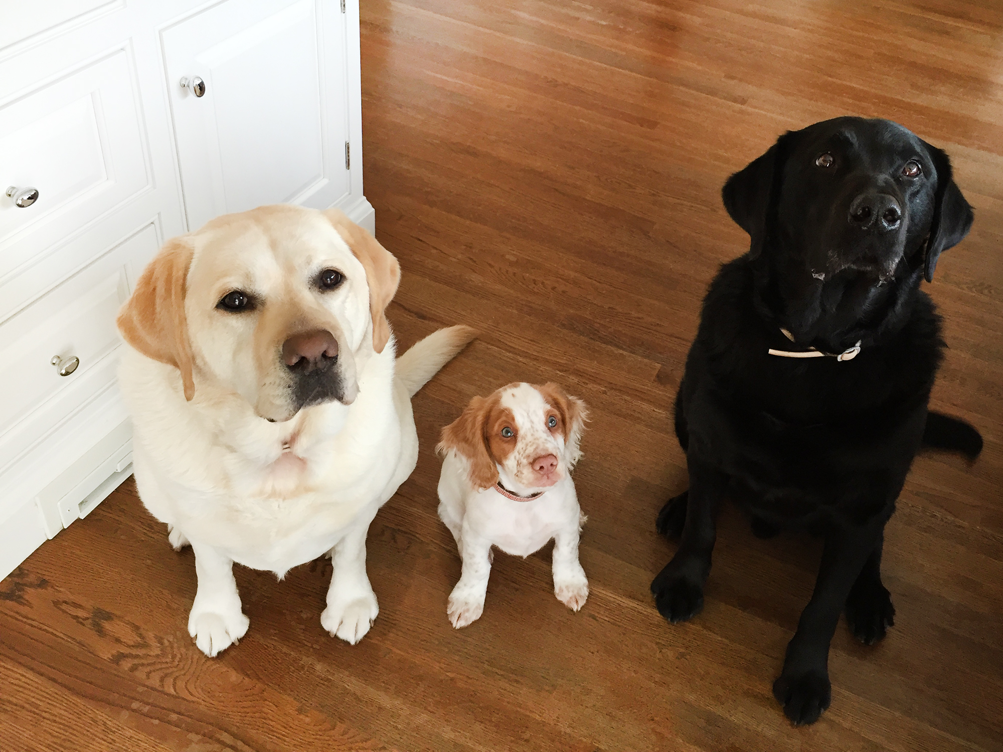 Neely's Nest – Pet Home Goods