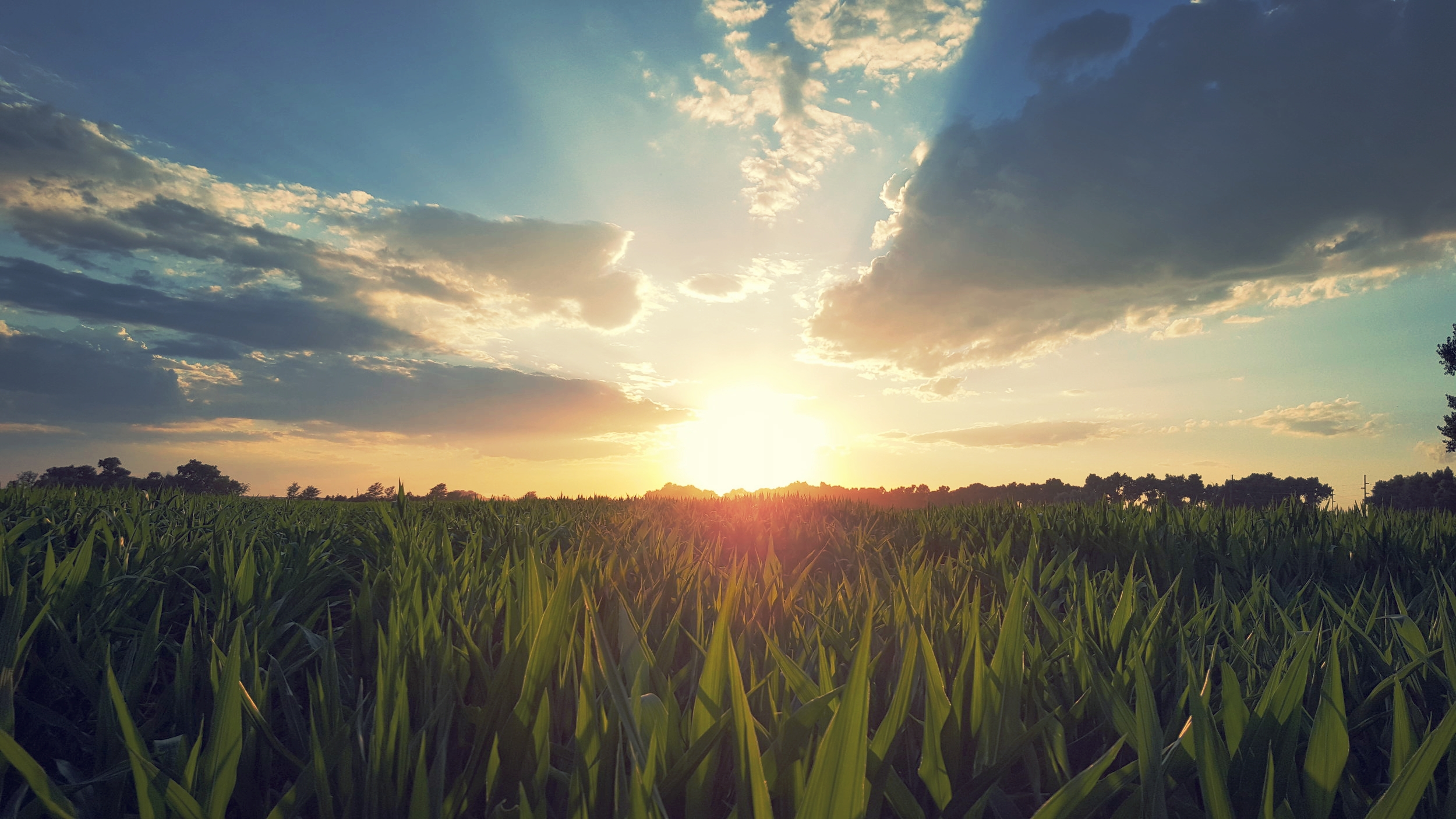 LocationWithin some of the most fertile Ag-land equals abundant quality feed -