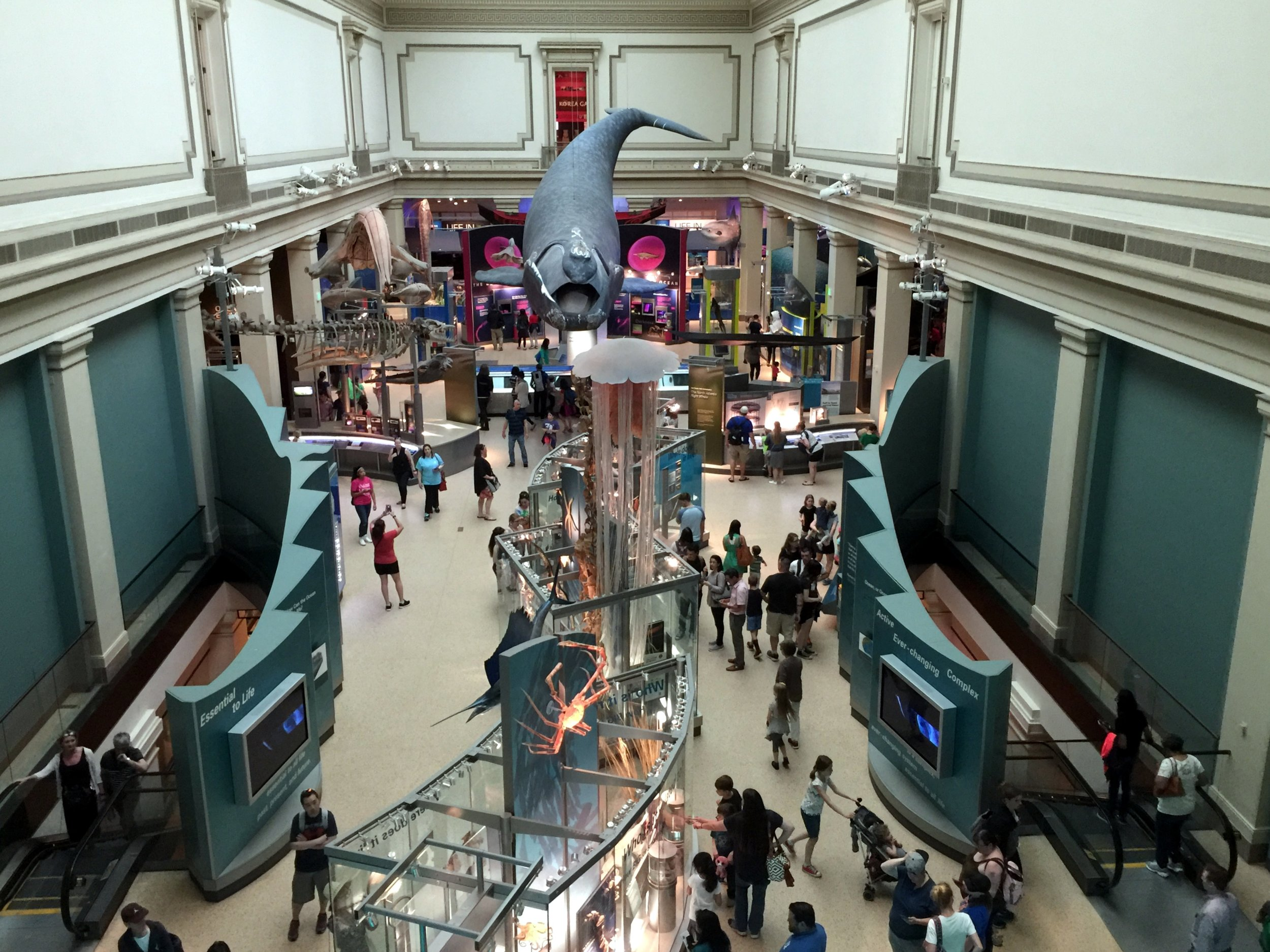Ocean_Hall_Smithsonian_Museum_of_Natural_History.jpg