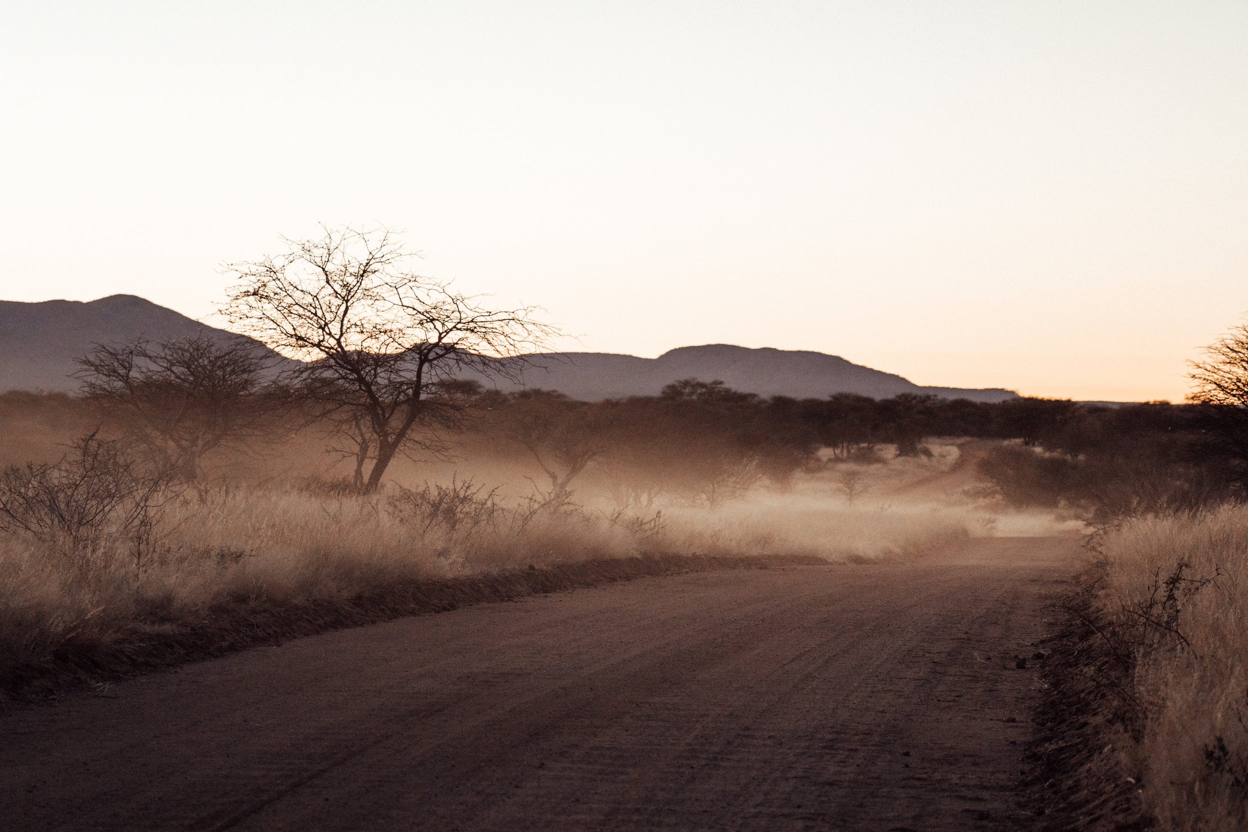 The view from the back of the car as we search for Honey before dawn