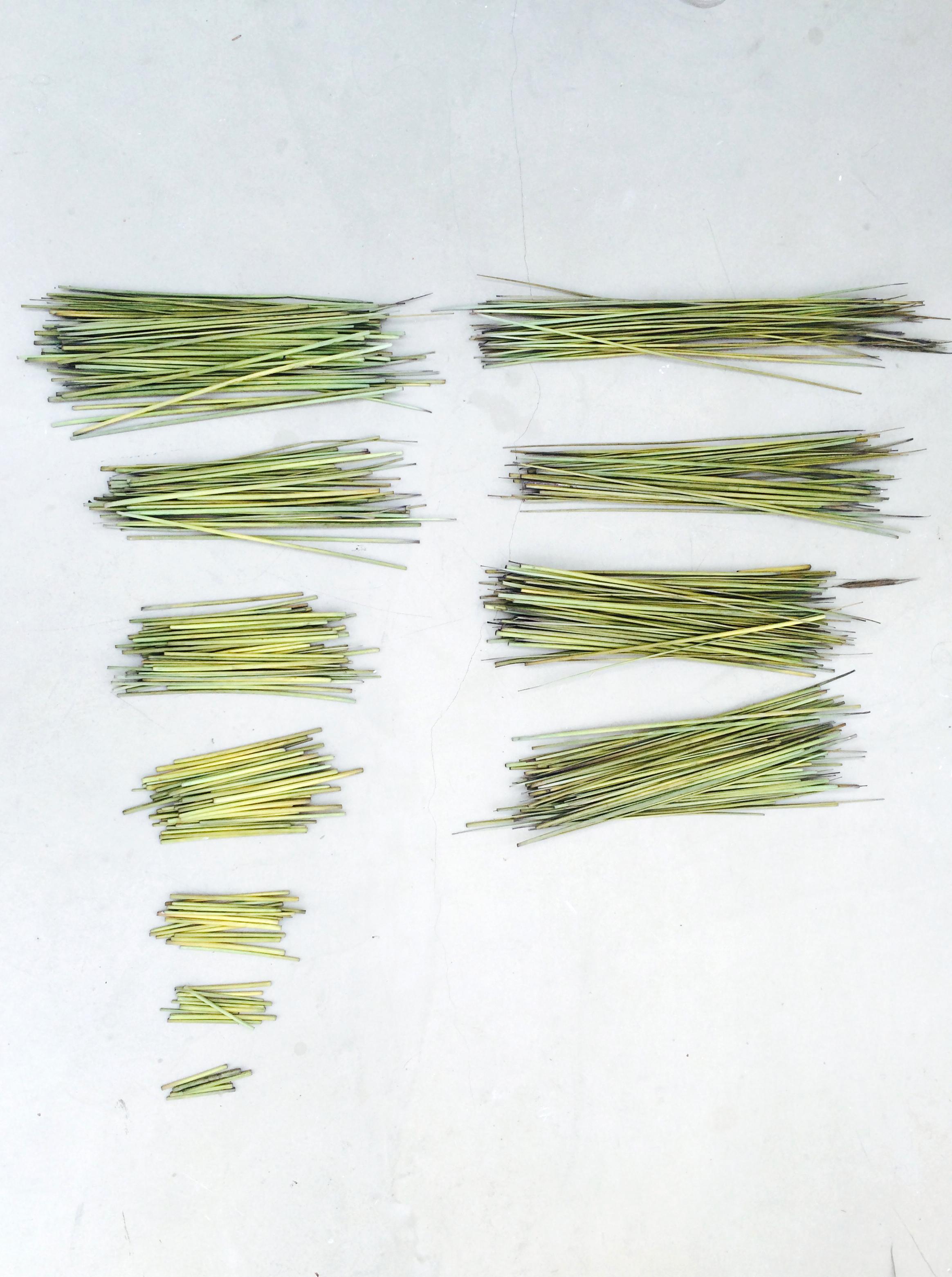 sorting the straw.jpg