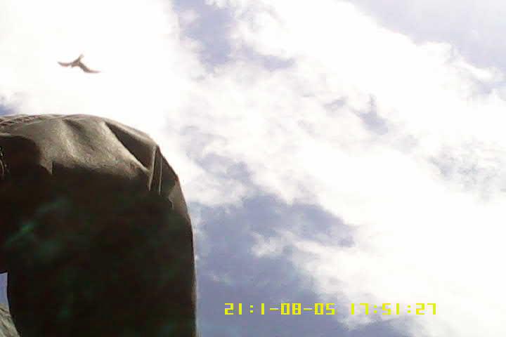birdcam experiment_04.png