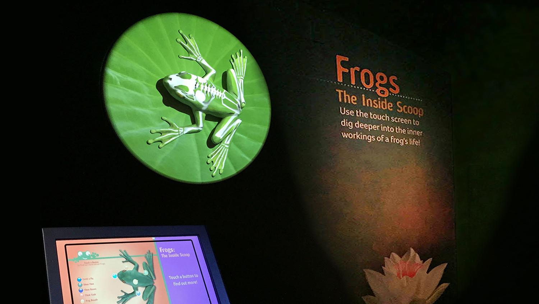Frog map 3c.jpg