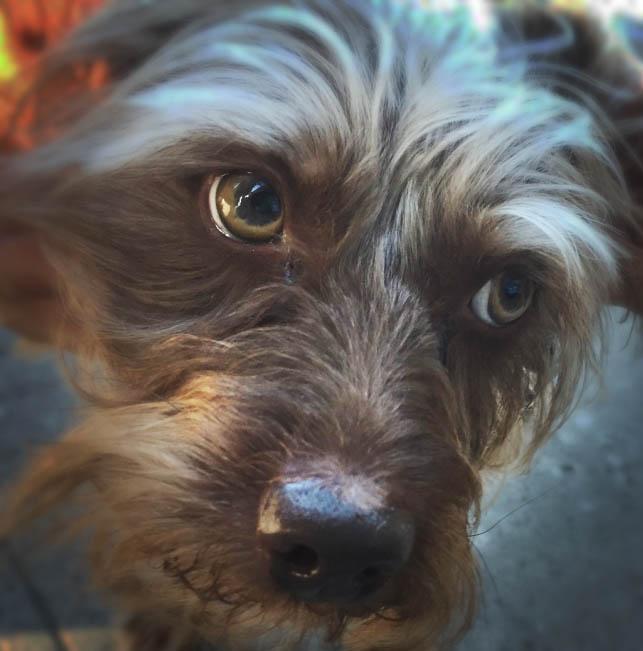 Dog Alberta Coop.jpg