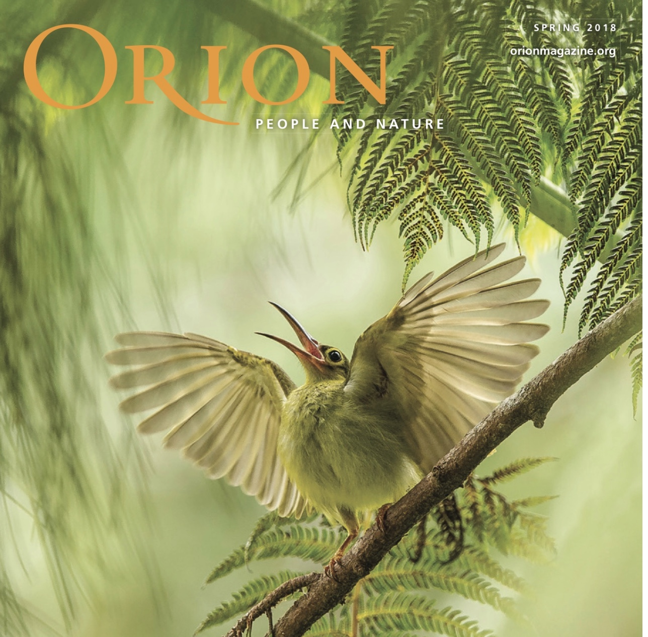 Orion cover image.jpeg