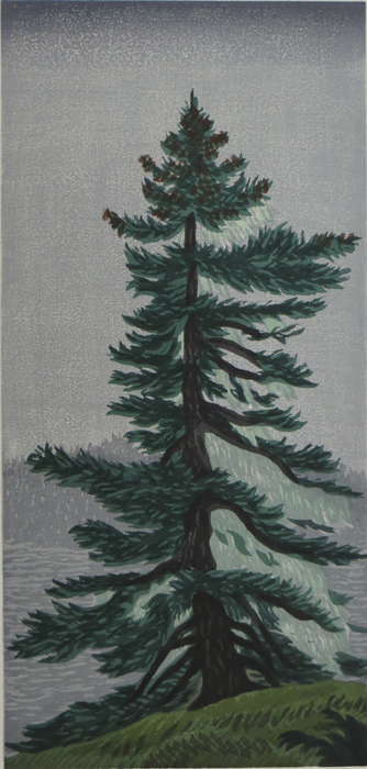 SPRUCE TREE AT PIG COVE