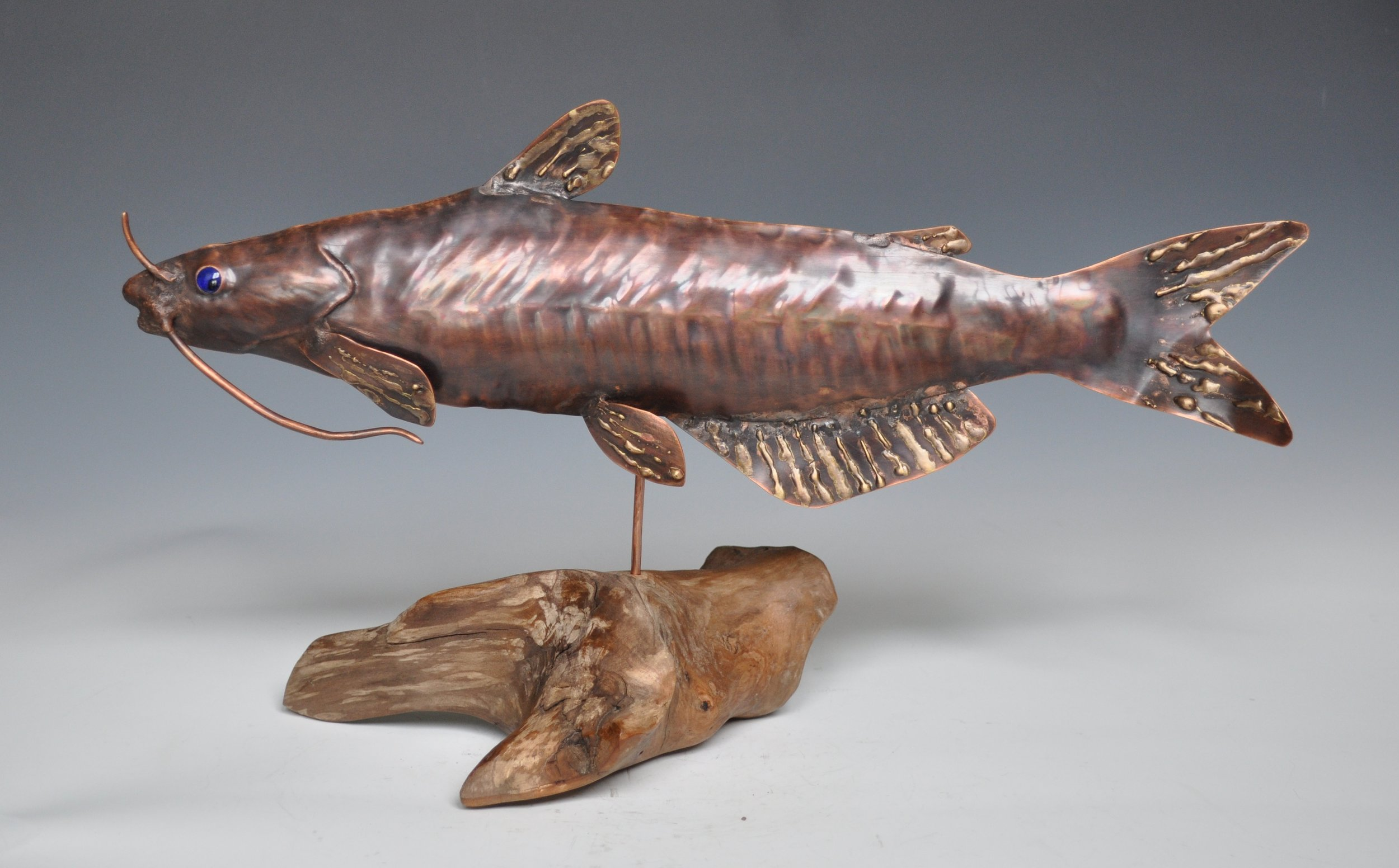 Channel Catfish in Driftwood Base