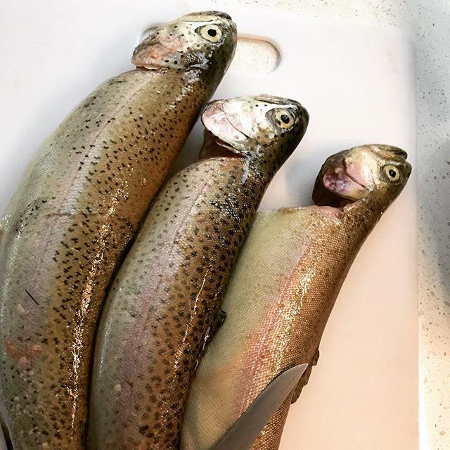 Fish fry Saturday