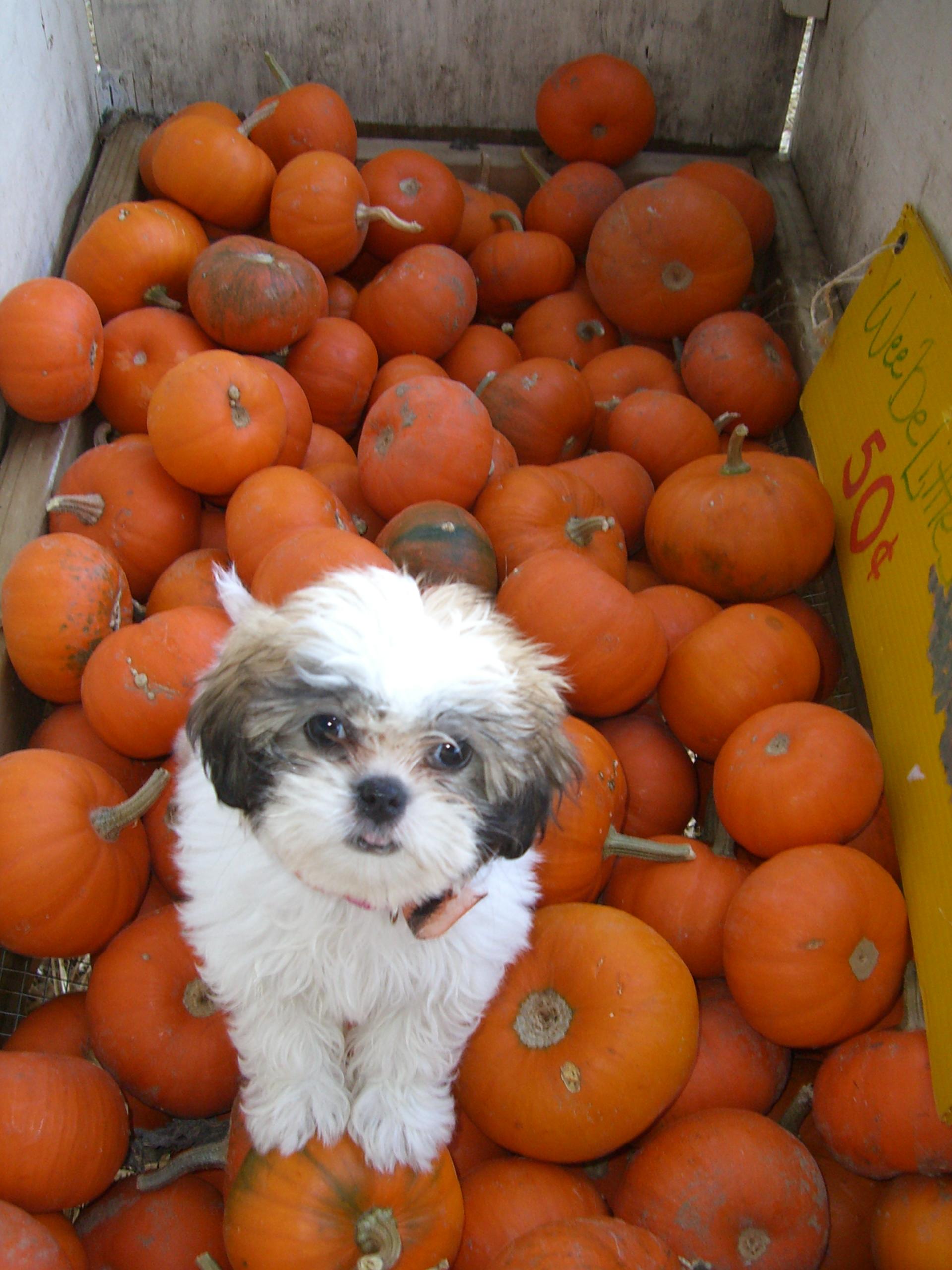 October 16-29,2006(reilly's bday, bella, halloween, fam (14).jpg