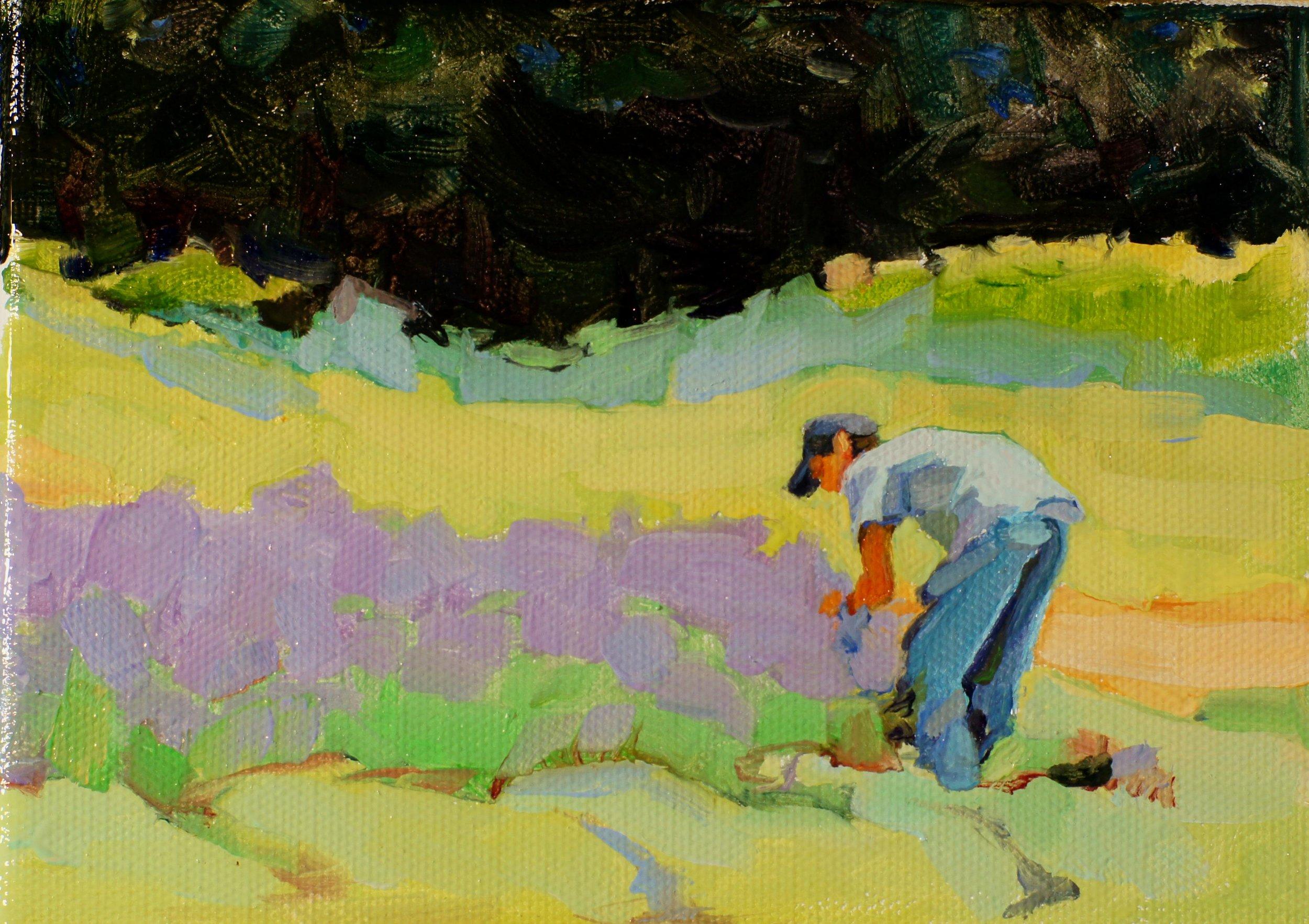 Picking Lavender. 5x7