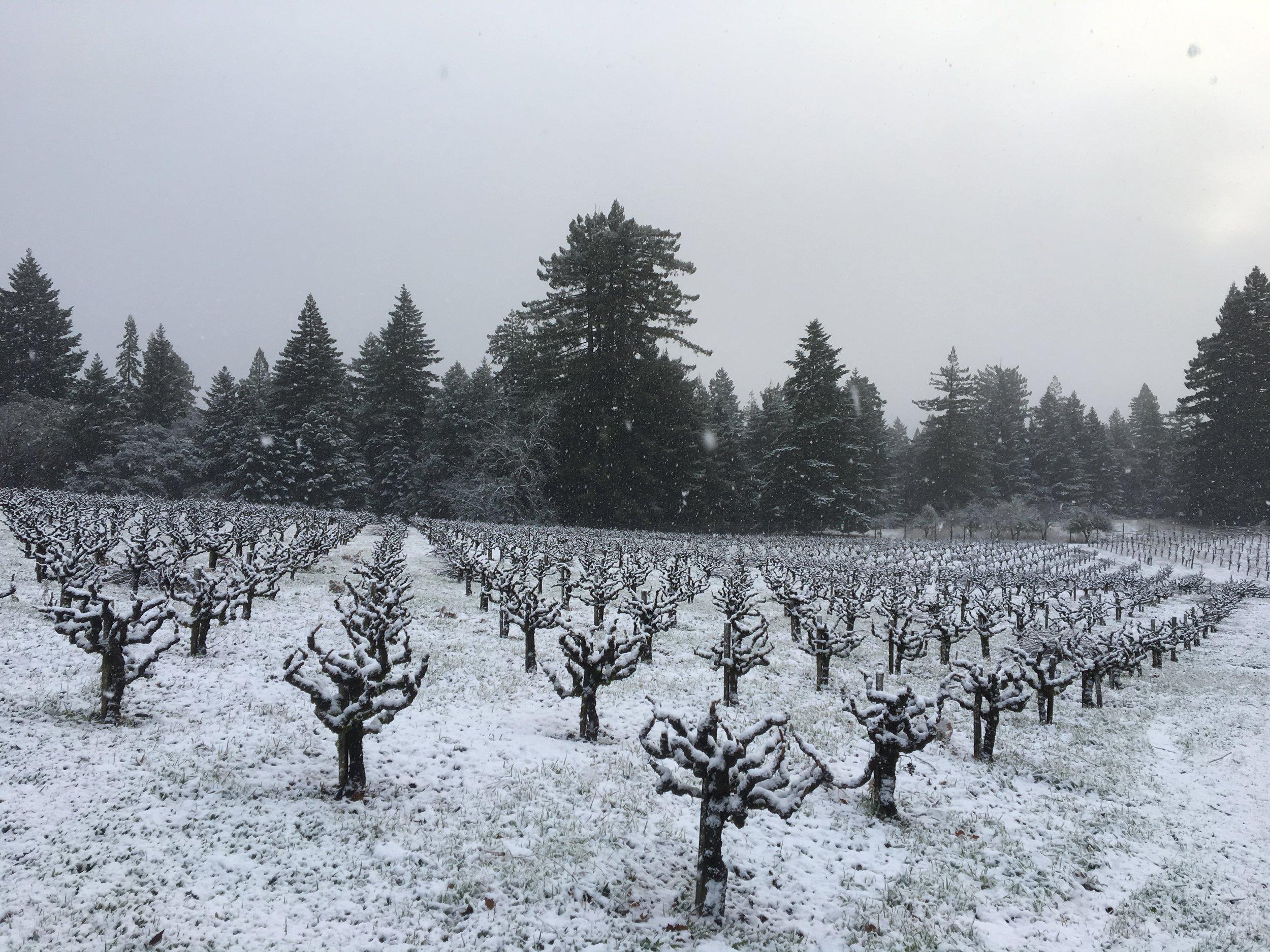 Snowfall at DuPratt