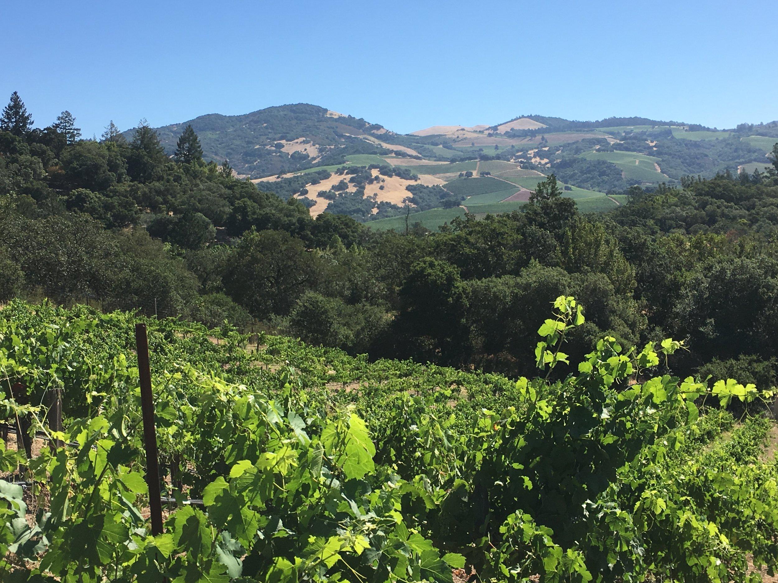 View across Sonoma Valley