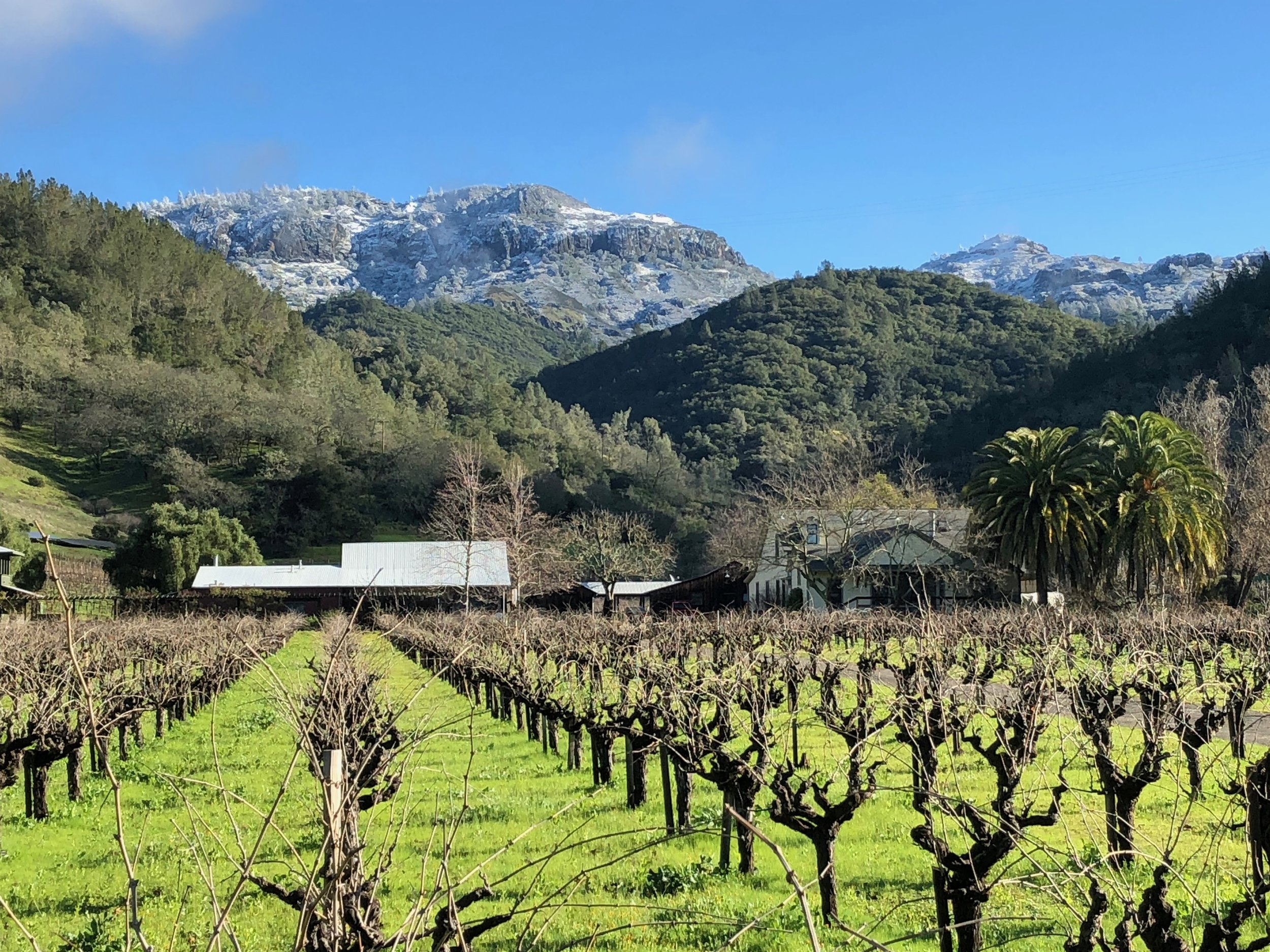 The Palisades above the vineyard after a rare winter snowfall