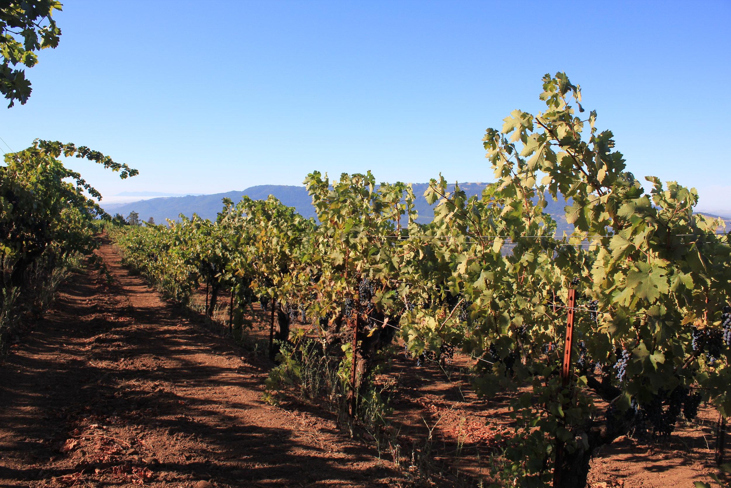 Looking south towards Sonoma Mountain