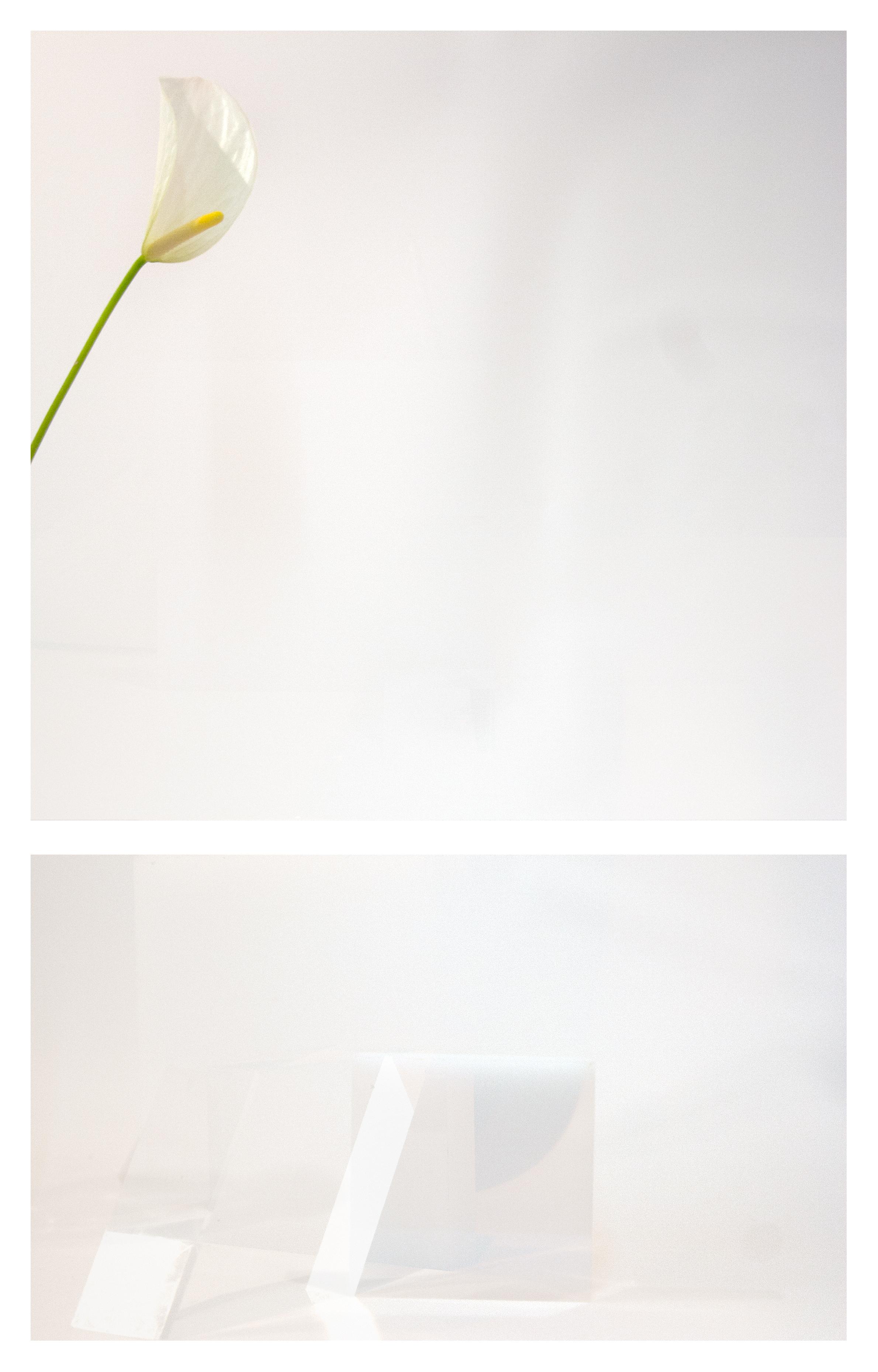 "Calla Lily Sun   Archival inkjet print  8"" x 12 1/2""  2017"