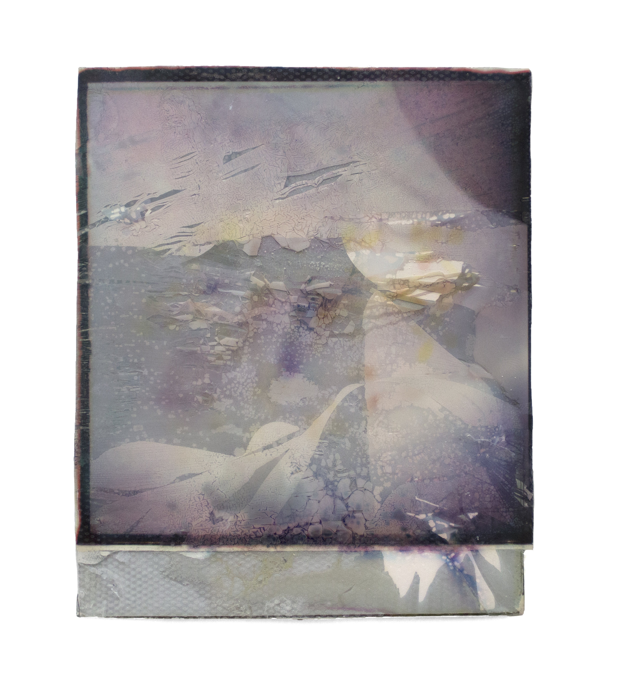 "Purple stalks greeting    Polaroid collage  3"" x 3 3/4""  2019"