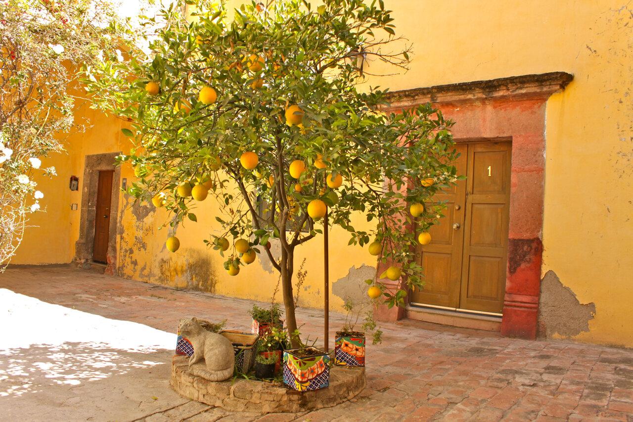 Atorres_House with orange tree.jpg