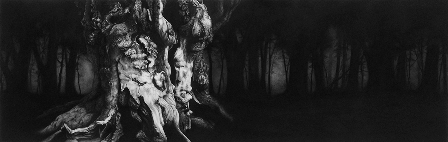 Windsor Great Park II  -  65cm x 200cm - Chatcoal & Conte, paper mounted on wood - 2014                                               SOLD