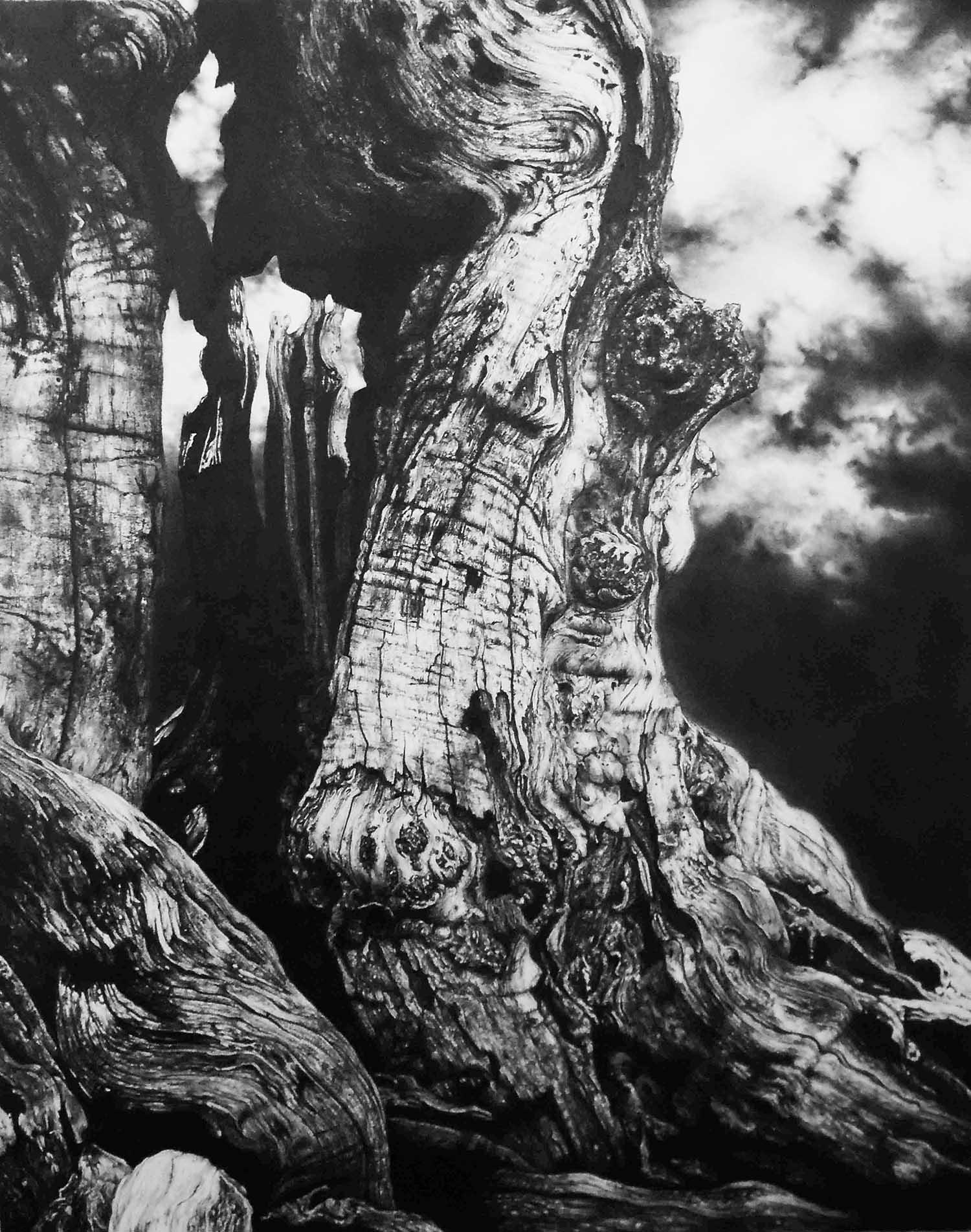 Cranbourne  -  55cm x 35cm - Graphite on Paper - 2014                             SOLD