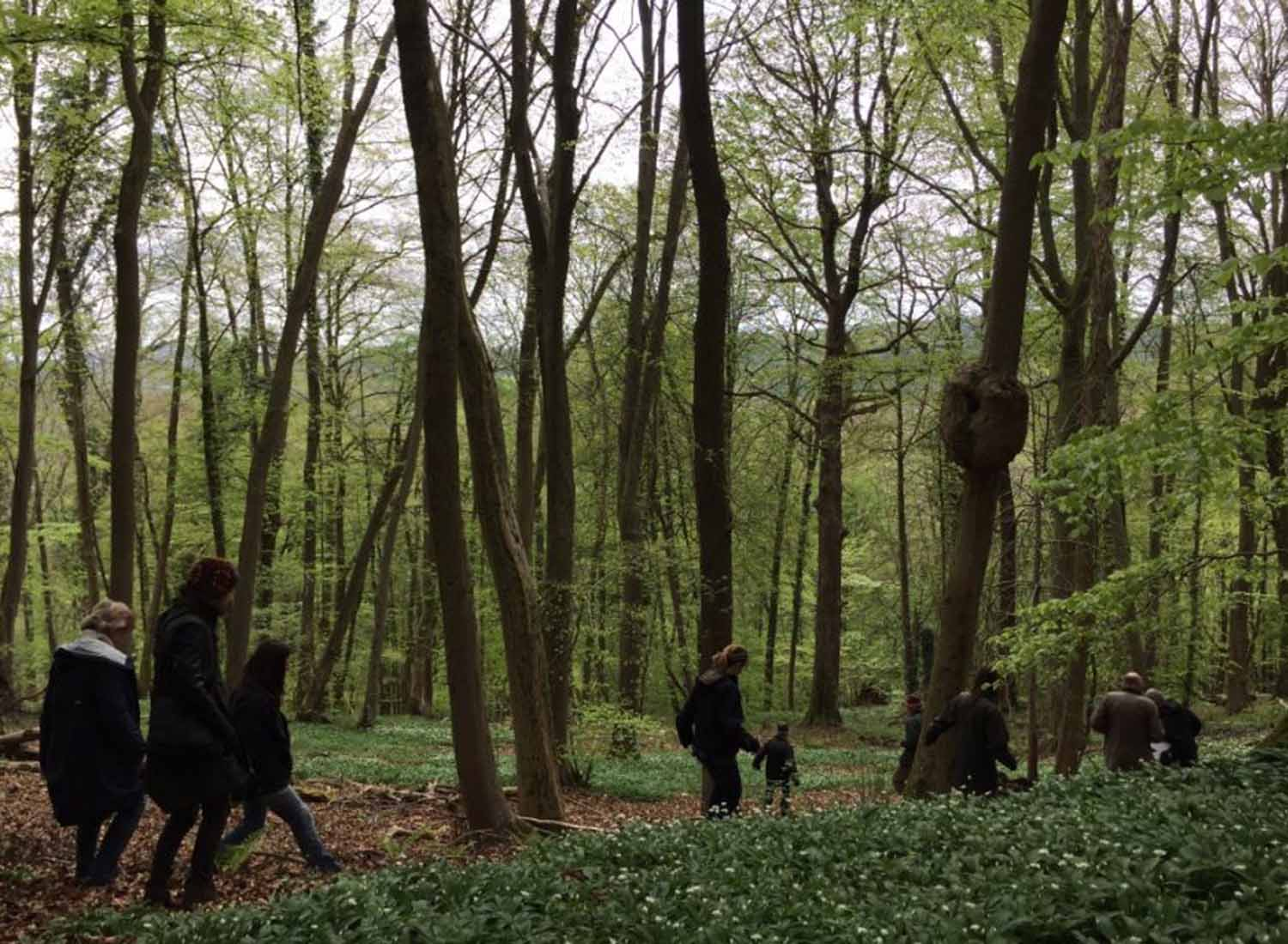 Entering the woods....... April 2017