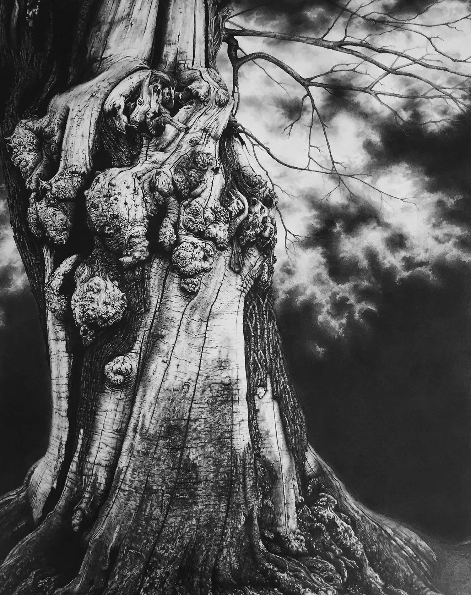 Croft Castle  -  Graphite on Paper - 75cm x 55cm - 2016