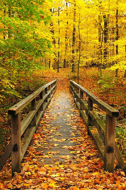 autumn bridge 35aa20781999d47d04767e4d61be6f56  pxhere .jpg