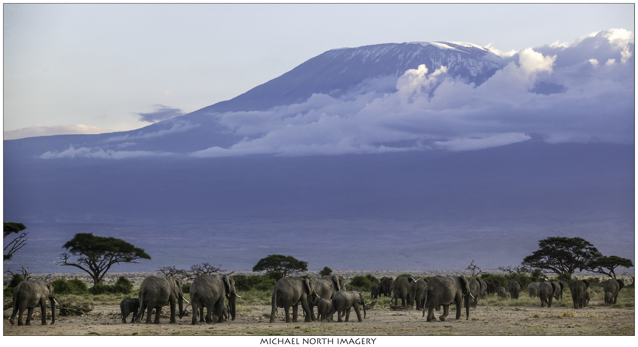 Elephant-2812.jpg