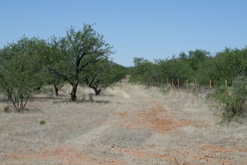 road in arivaca.jpg